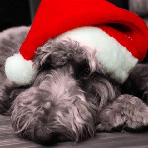 santa hats for dogs popsugar