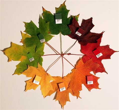 leaf colors why do leaves change colour in autumn science made simple