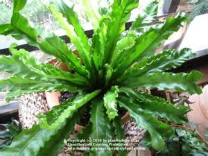 Tropical Indoor Plant Identification - indoor tropical plants pictures picture images frompo