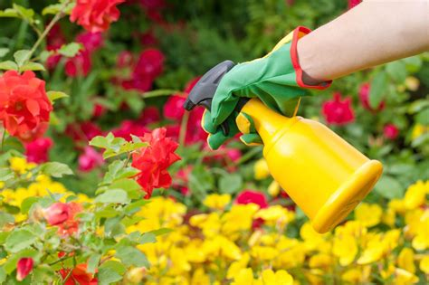 pesticide application timing     time