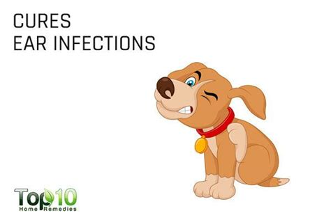 apple cider vinegar for ears infection top 10 uses of apple cider vinegar for dogs page 2 of 3 top 10 home remedies