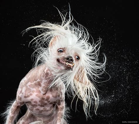 drooling and shaking hilarious portraits of drooling dogs captured by high speed