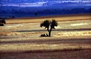 Palisade shavano peak crestone needle mount belford mount princeton