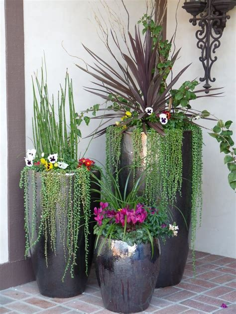 in door plants pot three four plants argements video 25 best ideas about outdoor potted plants on pinterest