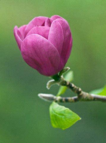 v protein djelovanje poznata ukrasna biljka smanjuje stres i nesanicu