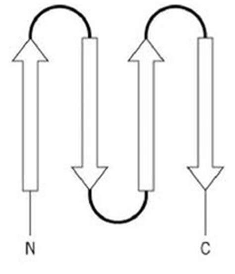 protein quizlet proteins 3d structure flashcards quizlet
