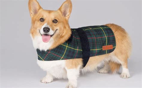 royal puppy royal collection for dogs s of corgis gives owners chance to dress