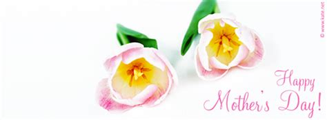 tulips net kate mother s day facebook covers by kate net