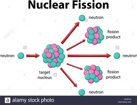 nuclear fission diagram fission stock photos fission stock images alamy