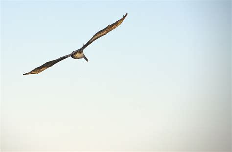 imagenes de karma bird fly fotos gratis silueta p 225 jaro ala cielo animal ave