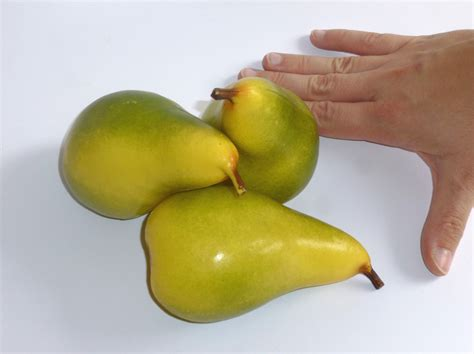 birne le pear imitation food replica food food dummy