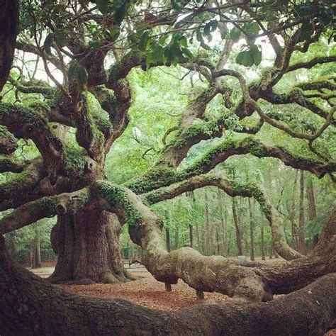 cool trees cool looking tree outdoor pics pinterest