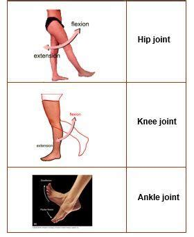 joint layout directed 1 overview of the lower limb gluteal region at american
