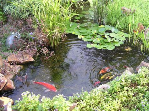 Is A Backyard Pond An Ecosystem by Ecosystem Shift 6000 Years Ago Caused By Humans Study