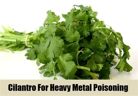 Herbs For Metal Detoxing by 5 Herbal Remedies For Heavy Metal Poisoning How To Treat