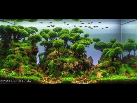 Tutorial Aquascape by 1000 Images About Aquarium On Plants Aga And