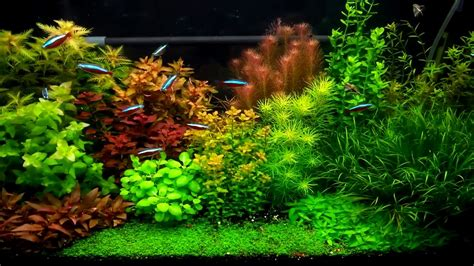 Dutch Aquarium Layout (1/2017)   YouTube