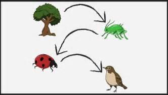 cadenas alimentarias y sus elementos ejemplos de la cadena alimentaria definici 243 n y