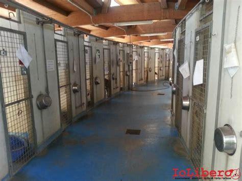 superiore Porta Portese Lavoro Pulizie #1: Immagine3.jpg