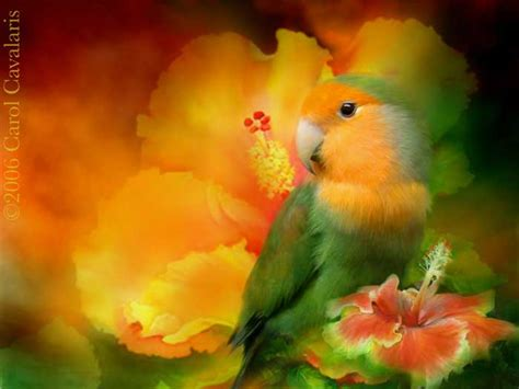 imagenes artisticas love birds series love among the hibiscus flowers and