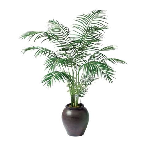 palm house plants palm trees house plants that look like