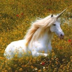 unicorns are real polyvore