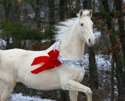 white christmas horse present red ribbon gift          tree
