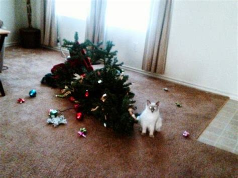 i have a cat need cat proof xmas tree reaganite independent cats vs trees