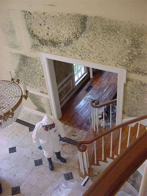 how to remove mold and detect it s early signs kukun