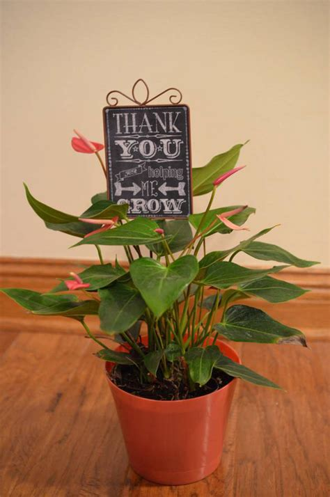 Wedding Gift Plant by Wedding Gift Plant Imbusy For