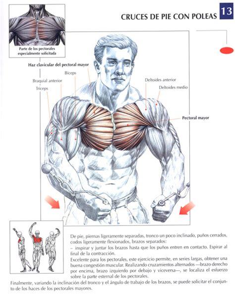 libro gimnasio para dedos en ejercicios pectorales fotos musculaci 243 n y pesas