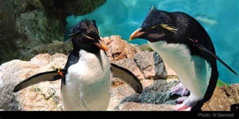 Boston Aquarium Gift Card - 10 things to do in boston with kids go boston 174 card