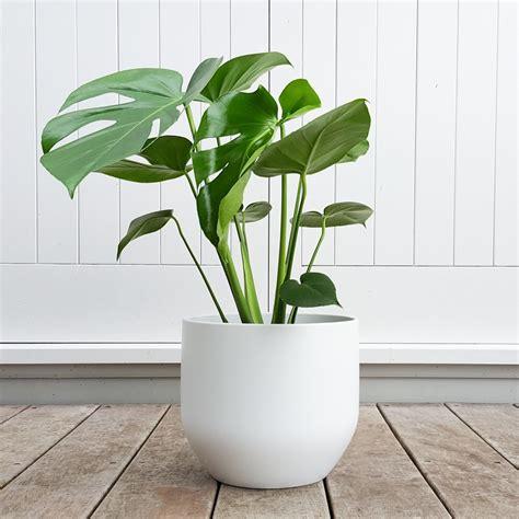 indoor planter pure white pot cm plantandpotnz