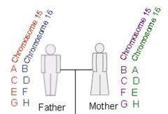 inheritance pattern quizlet patterns of inheritance flashcards quizlet