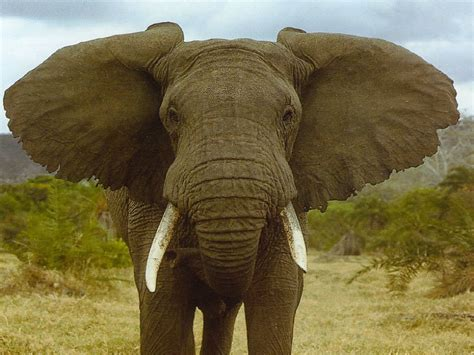 29 11 2011 l elephant