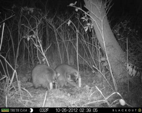 proof traps proof skunk trap images