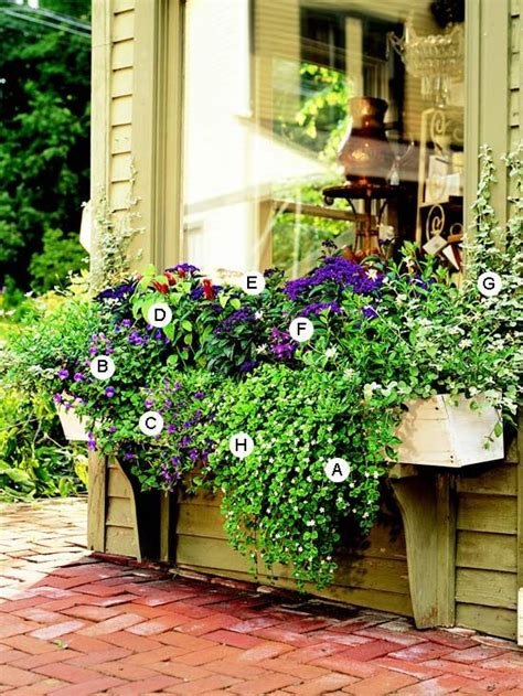 window box ideas for shade easy recipes for window boxes in shade pinterest shade