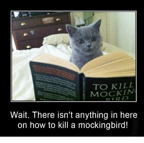 To Kill A Mockingbird Cat Meme - english 10 miss richards