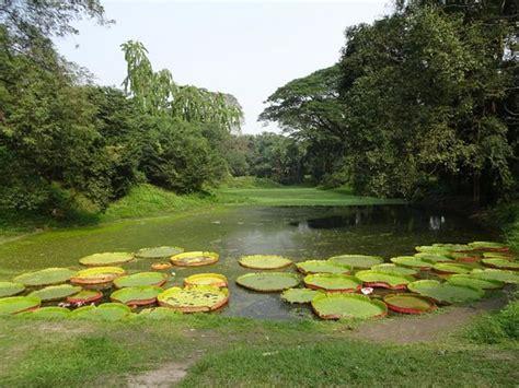 Indian Botanical Garden Ticket For 6 Seater Vehicle Picture Of Acharya Jagadish Chandra Bose Indian Botanic Garden