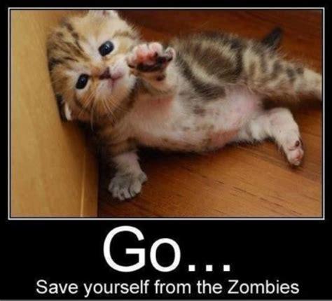Funny Zombie Memes - funny cat memes cat memes funny meme silly cats pics