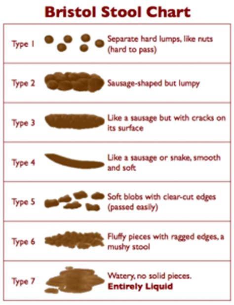 Changes In Stools And Bowel Movements by Normal Bowel Movement Vs Abnormal Stool Color Shape Volume Healthhype