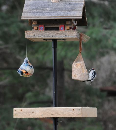 backyard birdshop 27 best images about bird feeding station on pinterest