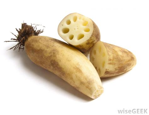 what is lotus root with pictures