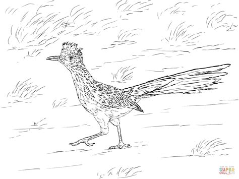 coloring pages of sw animals realistic greater roadrunner coloring page free