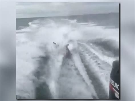 dragging shark behind boat names fwc identifies boaters involved in shark dragging viral video