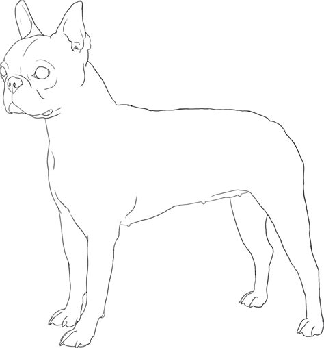 Boston Terrier Lineart By Doggiedoodles On Deviantart Boston Terrier Coloring Pages