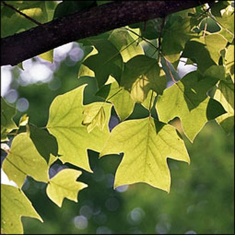 newsroom ontario tree atlas leaves out fall planting guesswork