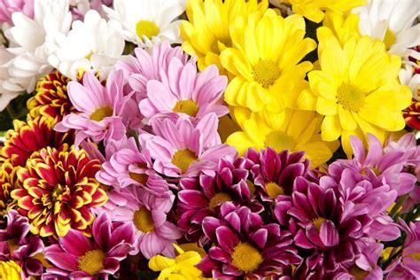Pom Pon Mum Bouquets ? Koolau Farmers