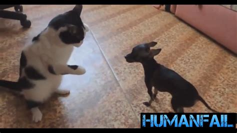 puppy compilation and cat cats vs dogs compilation by humanfail