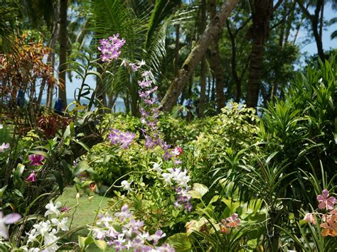 Beautiful Hawaiian Flower Garden Wallpaper Wallpapersafari Tropical Flower Garden